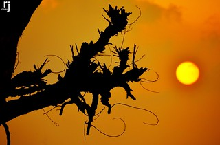 Silhouette of A Dry Tree