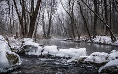 Frozen (Ulmi81) Tags: donau danube fischtreppe winter kalt cold eisig icy wasser water schnee snow eis ice wald baum bäume wood tree trees stimmung mood fliesen flowing ulm neuulm bayern badenwürttemberg
