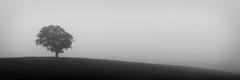 Field of mist (@spazzarama) Tags: subtle field copyspace minimalism landscape tree blackandwhite mist white mood moody panorama weather minimalist blackwhite
