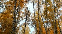 Autumn (Hermaeus) Tags: metsä autumn syksy