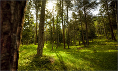 S-charl  San Jon (johnr71) Tags: trees light summer sun forest canon switzerland woods meadow 5d magical engadin scuol graubnden scharl sanjon