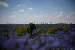 View over London from Alexandra Palace Park (SarahO44) Tags: park uk flowers blue blur london skyline ally view purple terrace south united north steps kingdom blurred palace peoples alexandra wharf canary shard pally