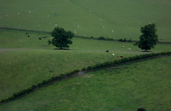 Scottish Field (Barefoot In Florida) Tags: trees green field scotland triangle cattle sheep pattenr