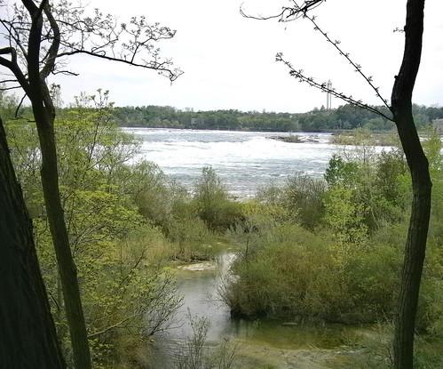 Niagara River Through the Trees