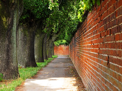 Opposite (Batikart) Tags: city travel trees light shadow red summer vacation holiday color colour green nature lines weather wall canon germany geotagged outdoors deutschland oak quercus europa europe opposite pov pavement sommer urlaub bricks natur sightseeing perspective tranquility sunny tunnel hannover symmetry sidewalk stadt recreation relaxation ursula vanishing bume contrasts baum mauer reise sander brgersteig niedersachsen lowersaxony leadinglines eichen backsteine 100faves 2013 gegensatz viewonblack batikart canonpowershotg11 halballee leafcanopyy