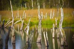 Wittmoor #0814 (Sascha Neuroth) Tags: hamburg herbst grn moor landschaft bume naturschutzgebiet wittmoor canon550d tamronspaf70300f456divcusd
