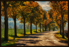 "autumn avenue • <a style=""font-size:0.8em;"" href=""http://www.flickr.com/photos/58574596@N06/10375476204/"" target=""_blank"">View on Flickr</a>"