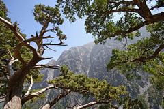 Samaria Gorge (Miguel Virkkunen Carvalho) Tags: travel trees summer mountains nature composition digital canon photography countryside scenery europe mediterranean outdoor branches south sigma august scene canyon greece crete gorge southerneurope samaria photooftheday picoftheday sigma1020mm bestoftheday eos1000d
