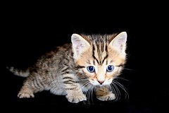 cute kitty (*LINNY *) Tags: pet pets cat kitten kat feline