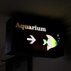 Aquarium (Leo Reynolds) Tags: xleol30x arrow canon eos 7d 0017sec f45 iso640 42mm hpexif xxx2013xxx sign