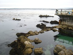"""Monterey Bay • <a style=""""font-size:0.8em;"""" href=""""http://www.flickr.com/photos/109120354@N07/11042977824/"""" target=""""_blank"""">View on Flickr</a>"""