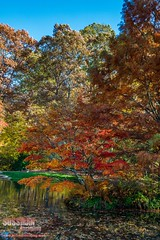 Gibbs Gardens (The Suss-Man (Mike)) Tags: autumn trees fall nature leaves georgia fallcolors cherokeecounty ballground thesussman sonyalphadslra550 gibbsgardens sussmanimaging