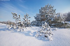 Winter landscape. (Igor Goncharenko) Tags: christmas new wood xmas morning travel blue winter light vacation sky panorama sun sunlight white mountain snow cold color tree ice nature beautiful beauty sunshine weather fairytale forest season landscape frozen highlands frost day view natural outdoor snowy hoarfrost background year snowstorm illumination cover fir environment snowfall majestic alp spruce