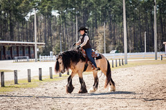 Meetup_Horses_1-19-14-4846.jpg (RobBixbyPhotography) Tags: meetupjacksonvillehorsesequestrian