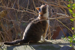 Lilly (Curl66) Tags: winter pet sunshine animal cat garden outside weed feline branch sitting sill shadows bare ruin vine sniffing enjoying