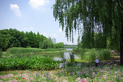 Century Park (Kathrin Eckert) Tags: china shanghai   pudong  chine jiangsu peoplesrepublicofchina centurypark   jiangsuprovince   pudongnewarea         pdng shnghish volksrepublikchina shnghifzji huangpueastbank shjgngyun lokatse
