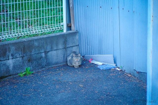 Today's Cat@2014-03-15