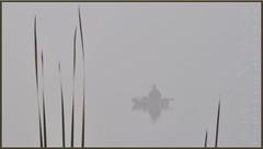 Dream Catch (Ncreator) Tags: morning lake fog landscape photography fishing nikon photos dslr d5000