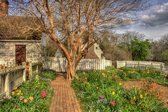 Spring in Colonial Garden (JerryGammon) Tags: tulips grunge fourseasons williamsburg colonialwilliamsburg crepemyrtle