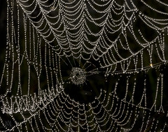web (marianna_m.) Tags: spider web water drop dew condensation macro abstract bokeh wednesday hbw mariannaarmata