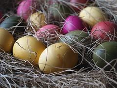 Colored eggs (www.creativ-pool.net) Tags: egg macro mondays stilllife bokeh schärfentiefe yellow gelb blue blau green grün orange red rot makro olympus esystem e30