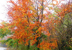 Autumn (davej1962) Tags: autumn llangattock uskvalley powys breconbeacons