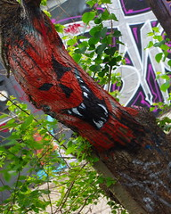 Graffiti Tree 2 IMG_0104 (mbagwt) Tags: mpt539 matchpointwinner