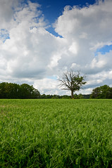 2015 06 22_d5100_0083 (swedgatch (Missing my Father)) Tags: nikon nature nikkor d5100 1685mm color colors capture art artistic angle swedgatch sweden summer stockholm photography photograph photo photographs photos photographer perspective light life landscape beautiful by beauty
