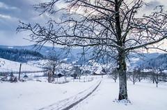 IMGP5724 (laurec.) Tags: luge neige oppenau