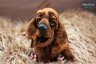 Bloodhound - Apollo