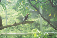 F1000007_lr (chi.ilpleut) Tags: singapore 2017 myday march outdoor outing film ilovefilms shootfilm kodakfilm expiredfilm jurongbirdpark birds seeing greenery ilovegreen analogue analog track grain