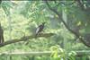 F1000007_lr (chi.ilpleut) Tags: singapore 2017 myday march outdoor outing film ilovefilms shootfilm kodakfilm expiredfilm jurongbirdpark birds seeing greenery ilovegreen analogue analog track grain