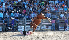 P3110255 (David W. Burrows) Tags: cowboys cowgirls horses cattle bullriding saddlebronc cowboy boots ranch florida ranching children girls boys hats clown bullfighters bullfighting