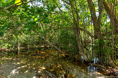 13. Cahuita, Costa Rica-40.jpg (gaillard.galopere) Tags: 2017 5d 5dmkiii apn america amérique animaux cr cri canon continentsetpays costarica couleur ef eos g11 mkiii nature travel vegetations voyage agua ameriquecentrale amériquecentrale arboles arbre arbres cahuita canonphotography centralamerica centroamerica color colorful compact eau forest foret forêt hood landscape landscapephotography marécage outdoor outdoorphotography ovelanding overland overlander paysage powershot sauvage traveler tree trees végétation water wild wood