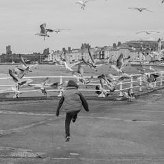Scaring The Gulls (evans.photo) Tags: aberystwyth people gulls seagulls ceredigion holidays tourists