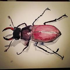 Gasten die een beetje te laat zijn, dan schilderen we nog een beestje. #aquarelleanimal #aquarelle #watercolour #beetle #insect #30min (belgianchocolate) Tags: instagramapp square squareformat iphoneography uploaded:by=instagram lofi
