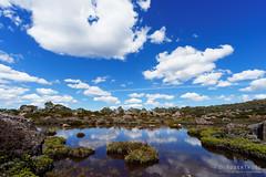 20170301-37-Cloud reflections in tarn (Roger T Wong) Tags: australia greatpinetier np nationalpark sel1635z sony1635 sonya7ii sonyalpha7ii sonyfe1635mmf4zaosscarlzeissvariotessart sonyilce7m2 tasmania wha wallsofjerusalem worldheritagearea alpine bushwalk camp clouds hike landscape trektramp walk