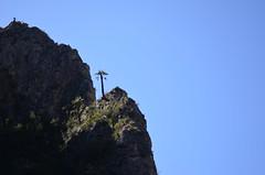 Palmera solitaria (::: Mer :::) Tags: sierrazapaliname coahuila cañondesanlorenzo rapel rappel outdoors mountains montañas cerros hiking montañismo caminata naturaleza nature canyon