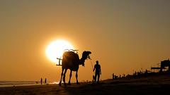 Puri..... Romance Never Ends (pallab seth) Tags: camel rider silhouette odisha puri bayofbengal india samsungnx300m samsung16mmf24ifunctionlens sunset seabeach orissa 2016