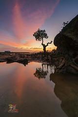 Show off Tree (Jose Hamra Images) Tags: awang telukawang sunset sunrise seascape landscape longexposure lombok lomboktengah ss sea tree waterscape mangrove sky