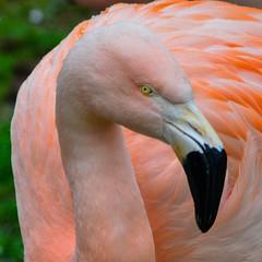 Majesty (dqpagan) Tags: montgomerycounty cute adorable tropical beak pinkish feathers feather elegant majesty bird pink elmwoodzoo flamingo