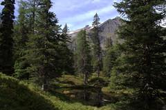 05-IMG_8391 (hemingwayfoto) Tags: österreich alpen austria baum europa fichte hochmoor hohetauern landschaft moorauge nationalpark natur naturschutzgebiet rauris rauriserurwald reise schnee spitzfichte tannenbaum urwald wald