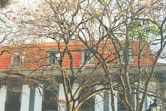 Casco Antiguo, Panama (DannyGuardia) Tags: vintage indie photography camera landscape museum life summer trees art architecture buildings free panama happiness nature travel kisw kiss boy flickr