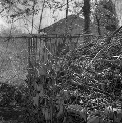 leaf compost bin, wire fence, yard, West Asheville, NC, Ricohflex Dia Original TLR, 80mm f-3.5, Rollei RXP 400, Kodak TMax developer, 4.1.17 (steve aimone) Tags: compost leaves fence wire yard westasheville nc ricohflex ricohflexdiaoriginal80mmf35 tlr rolleirxp400 kodaktmaxdeveloper 120 film 120film mediumformat monochrome monochromatic blackandwhite