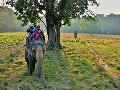 "NEPAL, Royal Chitwan-Nationalpark, Elefanten-Safari, 15408/8192 (roba66) Tags: tier tiere animal animals creature elefant elephant fotosafari safari elefantensafari reisen travel explore voyages roba66 visit urlaub nepal asien asia südasien ""royal chitwannationalpark"" nationalpark landschaft landscape paisaje nature natur naturalezza"