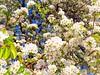 MÜTHİŞ BAHAR (murathanduran1) Tags: bahar spring büyükçekmece çiçekler flowers istanbul türkiye turkey fotoğraf photo