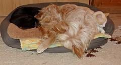 Gute Nacht * Good night * Buenas noches *   . P1340857-001 (maya.walti HK) Tags: 080417 2017 animales animals cats copyrightbymayawaltihk dogs flickr gatos hunde katzen mönschterli nartus panasoniclumixfz200 perros sputnik tiere