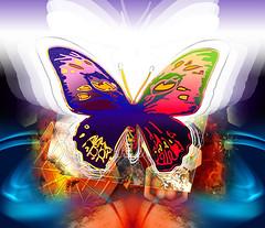 Butterfly effect new (mfuata) Tags: butterfly kelebek effect etki simetri symmetry denge özgürlük freedom ışık light umut