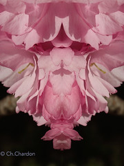 (christine chardon) Tags: fleurs flowers flores fiori innommés creatureart creaturedesign creation creature nature plante botanic photoart masque personnage fantastique mysterious printemps spring jaune rose sakura cerisier