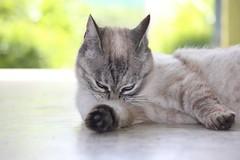 IMG_1378_1 (Pablo Alvarez Corredera) Tags: mundo rural mascota gato gata gatita dormi